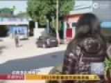 监拍广州一厂区看门狗叼回婴儿尸体