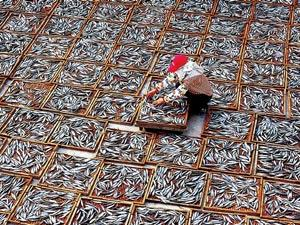 """澎湖土壤贫瘠,于是他们以海为生,以""""海""""为食"""