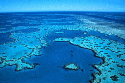 海底的野生动物王国,大堡礁。