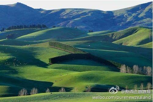 夏季层层叠叠的绿色