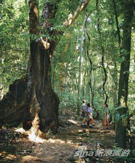 天然热带雨林旅游胜地