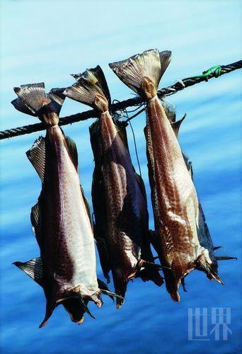"""风干的鱼类一直是冰岛传统饮食中的""""大户"""""""