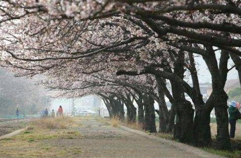 花团锦簇的时节