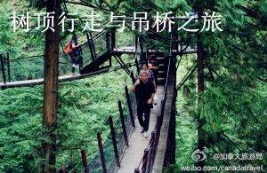 树顶行走与吊桥之旅