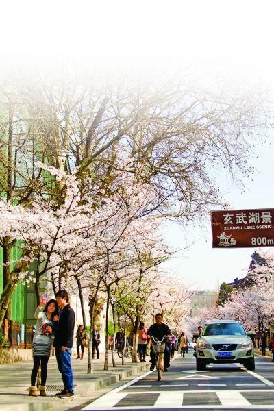 南京鸡鸣寺边的樱花街。