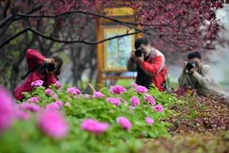 隋唐城遗址植物园西门举行,自此,洛阳各牡丹观赏园的赏花游园活动拉开
