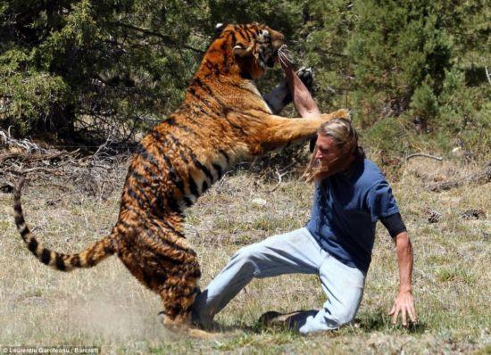 盘点美国历史上的那些 大老虎图片