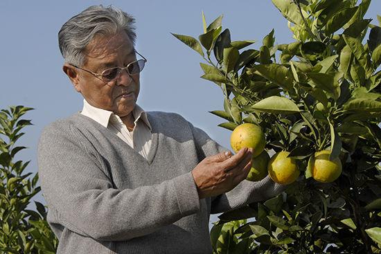 2007年,褚时健在新平果园查看果情