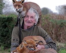 老爷子和他狐狸娃的故事