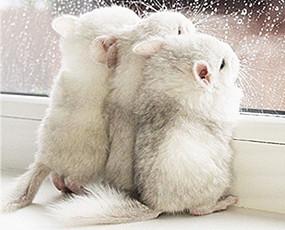 龙猫萌照融化网友
