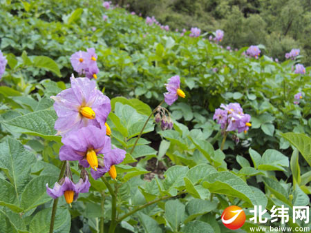 宝兴硗碛藏族乡寻花之旅
