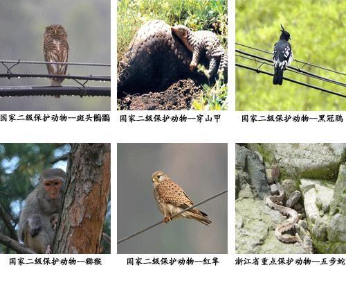 大盘山:野生动物资源简介(图)