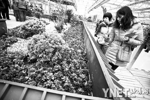 首届北京农业嘉年华教游客家庭绿化