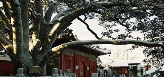 千年古刹戒台寺2015年第十九届丁香节