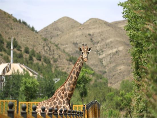 呼和浩特大青山野生动物园简介