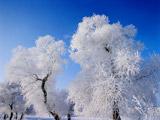 中国吉林国际雾凇冰雪节