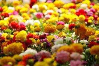 #香山山花季#
