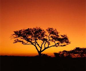 南非旅游业利用世界杯商机