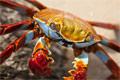 什么样螃蟹最好吃