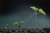 农业十年成就回顾