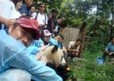 在碧峰峡基地亲密接触大熊猫