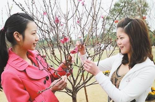 南宁青秀山第17届桃花艺术节开幕(图)