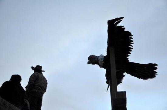 库斯科:大兀鹰与公牛之战
