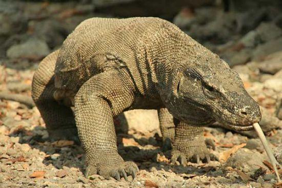 巴厘岛上的侏罗纪怪兽(图)