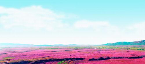 北京平谷将隆重举行第十四届国际桃花音乐节