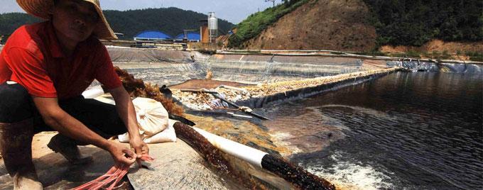 实拍福建紫金矿业重大污染