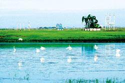 中石油生态油田