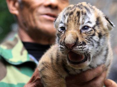 (二)野生动物保护条例出台过晚