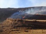 起火的草原