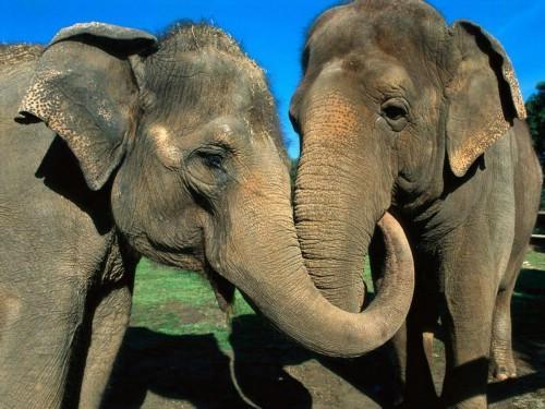 环保前线:大象彬彬和Women的幸福(图)_新闻中