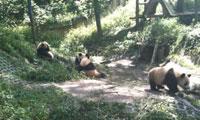 观察团首遇大熊猫