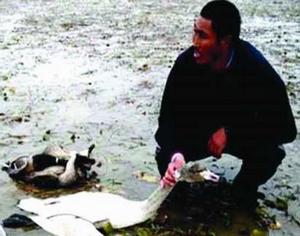 鄱阳湖候鸟遭疯狂猎捕