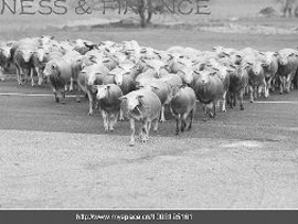 """""""羊群效应""""是典型的动物从众行为 资料图片"""