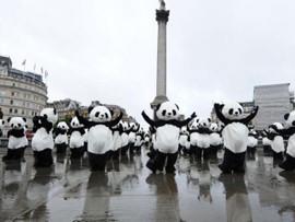 """伦敦街头108只""""大熊猫""""打太极"""
