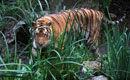 上海动物园9岁华南虎咬死57岁饲养员