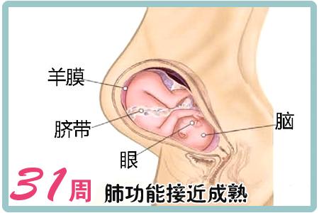 怀孕第31周胎儿图
