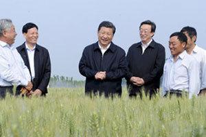 习近平在尉氏县张市镇察看小麦长势