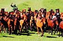 军马驰骋在山丹草原