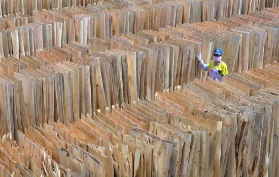 """加载双标识的林产品意味着获得了进入市场的""""绿色通行证"""
