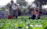 图文:透视禾城农民工孩子的幼教现状