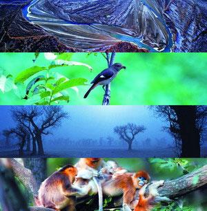 自然类纪录片《森林之歌》的成功原因探析