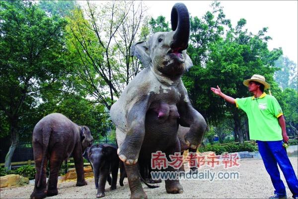 它2005年出生在香江野生动物园