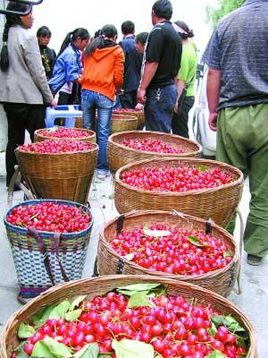 茂县蔬菜拉到成都后只能低价出售