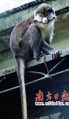 广州动物园引进一批珍稀动物园庆期间有优惠