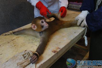 业界点评:《实验动物》倾注了许多人文关怀,理解了猴子们的喜怒哀乐