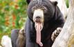 北极熊对镜头招手